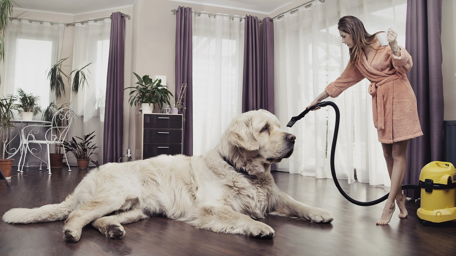 https://devices4home.com/wp-content/uploads/2018/10/pet-vacuum-1600.jpg