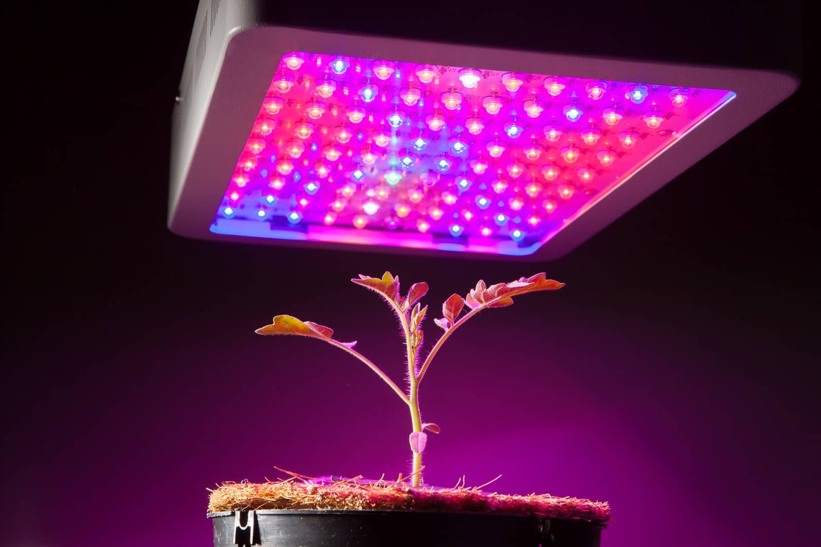 How to use the grow lights